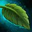 Feuille de menthe cultivée