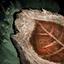 Guild Wars 2 Feuille fossilisée