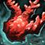 Morceaux de corail